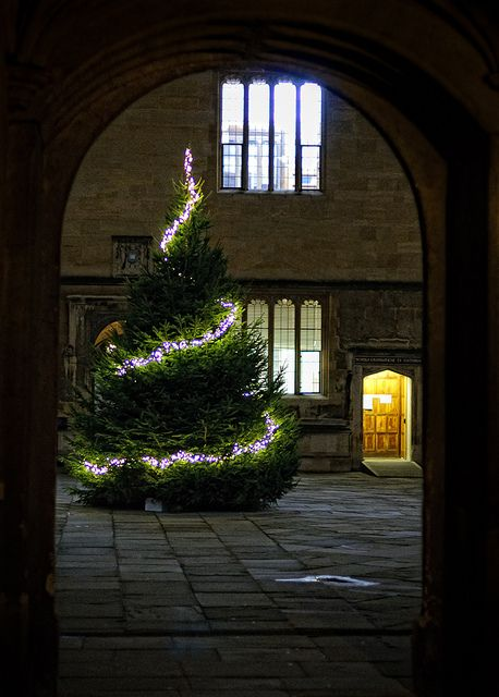 69 Best Images About Lighted Trees On Pinterest