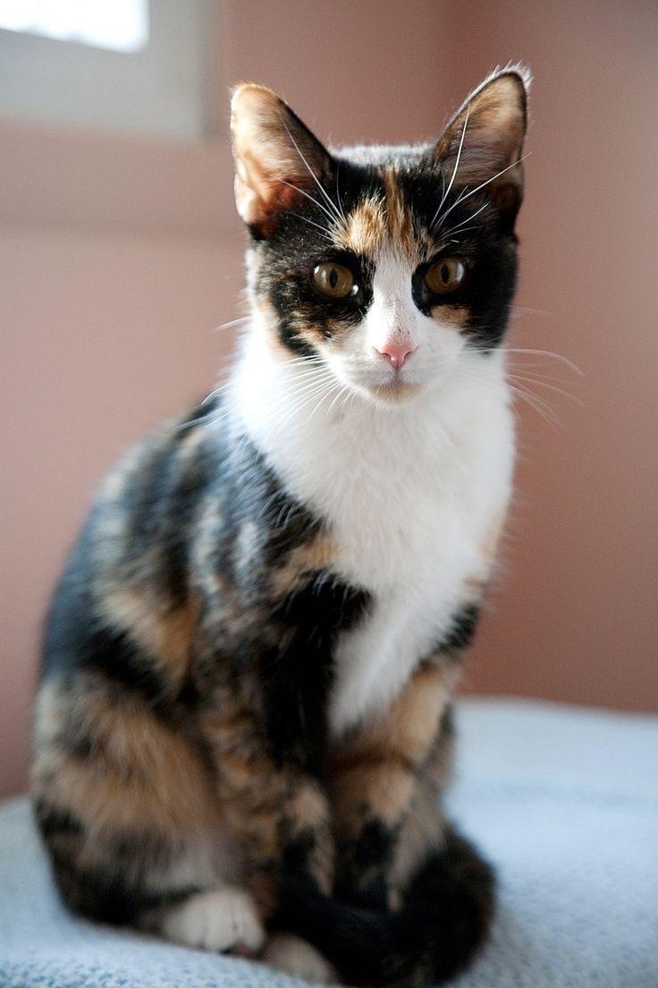 Omega Katzen Cutecats Katzen Katze Niedlich Susse Katzen Und Katzchen Katze Schon C Cats Cats Cutecats Katzen Schildpatt Katze Tiere Schon