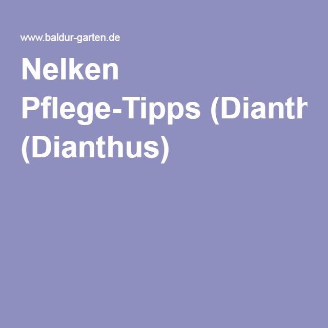 The 25+ Best Ideas About Nelken On Pinterest | Rosa Nelken, Nelken ... Nelken Im Garten Pflanzen Arten Blumen Tipps