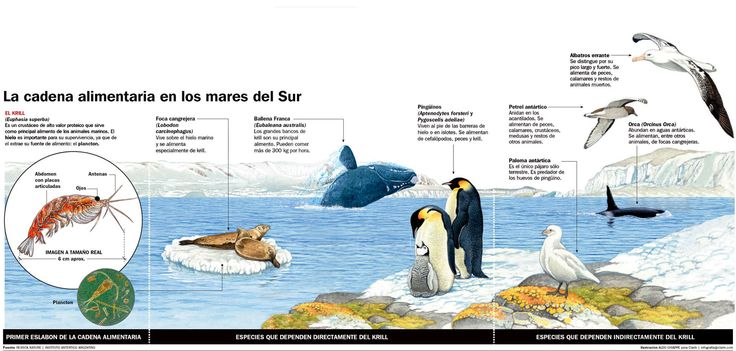 Clases de pingüinos. Antartica. Chile www.enjoy-chile.org