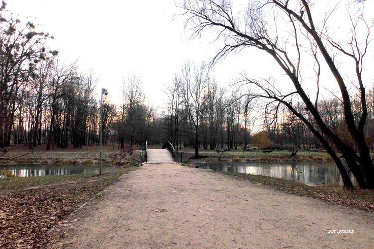 Park na Bydgoskim Przedmieściu 7 styczeń    - 2015