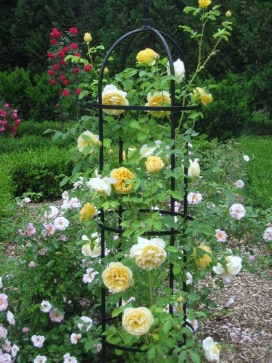 Rose Garden Ideas how to grow roses on balcony patio and terrace 14 Diy Ideas For Your Garden Decoration 10