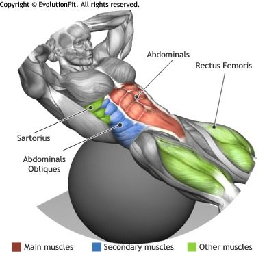 ABDOMINALS - CRUNCH ON STABILITY BALL