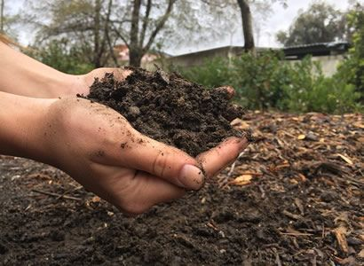 Importance Of Organic Fertilizer To Your Garden