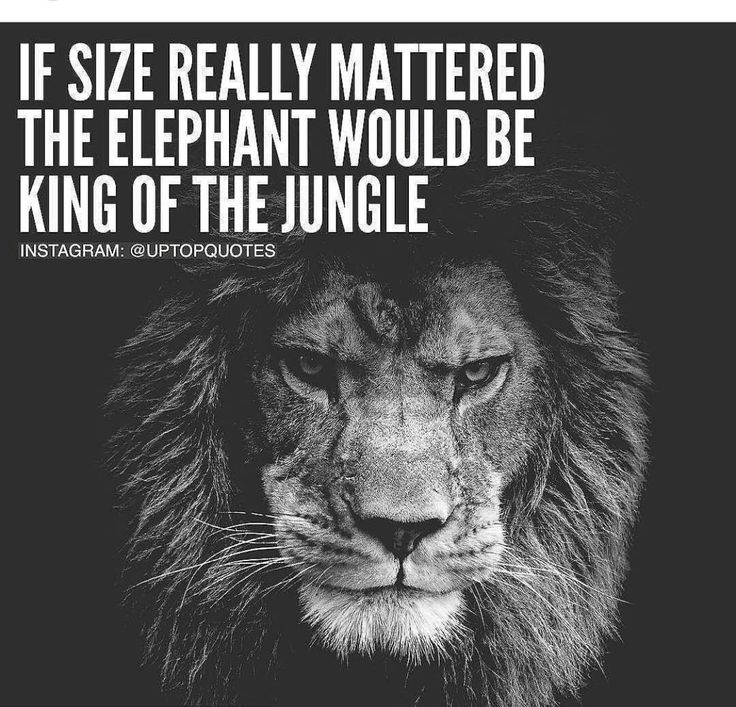 If size really mattered the elephant would be the king of the jungle.