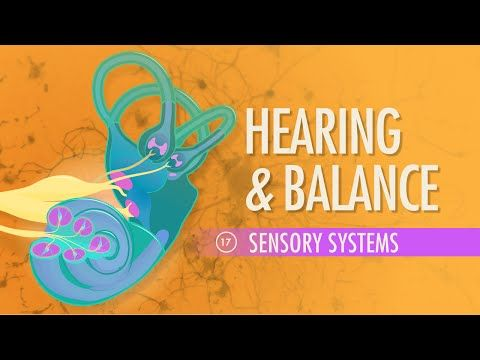 Hearing & Balance: Crash Course A&P #17 by thecrashcourse: Crash Course A&P continues the journey through sensory systems with a look at how your sense of hearing works. We follow sounds as they work there way into the ear where they are registered and transformed into action potentials. This mechanism not only helps you hear but also helps maintain your equilibrium.Table of ContentsChoclea, Basilar Membrane, and Hair Cells Register and Transduct
