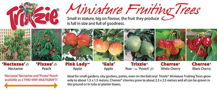 Fleming's Nurseries - Trixzie Minature Fruiting Trees