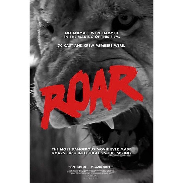 From @thrillema  Thrillema is excited to present... Drafthouse Film's ROARas a part of CAT FEST 2017!  July 6th - 8:00pm - The Museum of Natural History  This 1981 American adventure exploitation film has been deemed the most dangerous movie ever made! No animals were harmed in the making of this movie however 70 members of the cast and crew were. . . #roar #drafthouse #roarfilm #lionsandtigersandbearsohmy #movienight #bigcats #catfest #catfest2017 #localcinema #thrillema #movietheatre