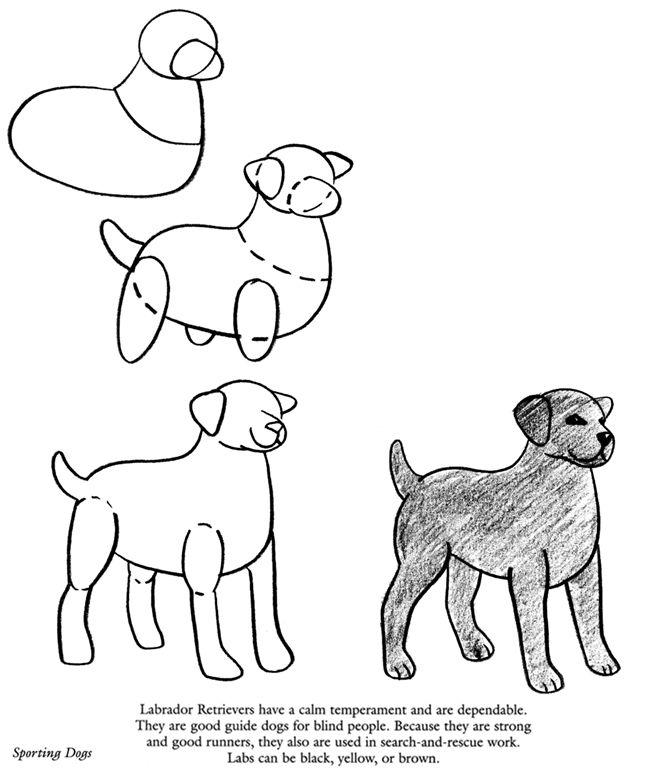 how to draw a cartoon labrador puppy
