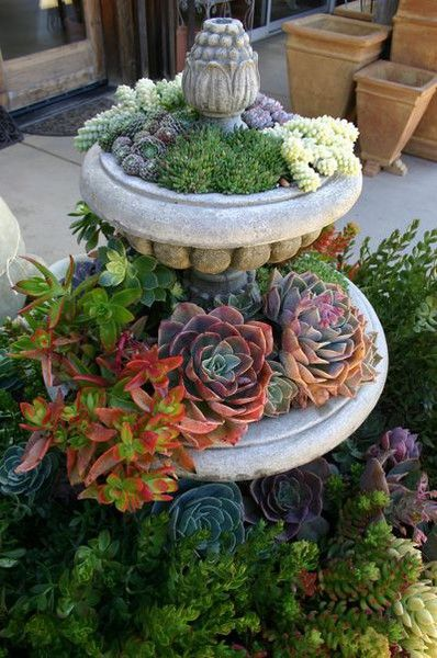 Outdoor or Balcony Succulent Garden Ideas: Gardens Ideas, Container Garden, Succulents Container, Birdbaths, Succulents Gardens, Gardens Fountain, Succulent Container, Plants, Birds Bath