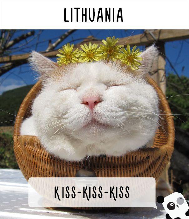 """Każdy kraj ma swój język, naturalnym jest więc również to, że w każdym kraju ludzie inaczej porozumiewają się ze swoimi pupilami. Myśleliście, że nasze polskie """"kici-kici"""" jest uniwersalne? Myliliście się! Ale nie ma powodów do paniki. Poniżej znajdziecie krótki poradnik, jak zwracać się do kotów, napotkanych na wakacjach za granicą"""