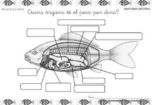 33 mejores im u00e1genes sobre continguts peixos en pinterest