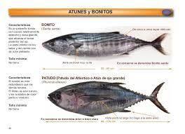 Resultado de imagen para el pescado bonito tiene escama.