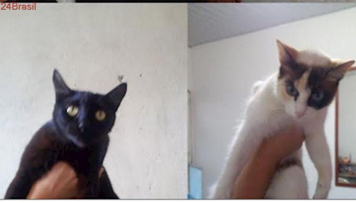 Gatos abandonados buscam um lar no Alcântara, em São Gonçalo
