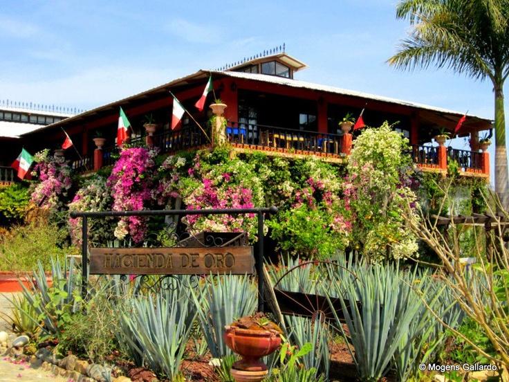 17 best images about puerto vallarta tours on pinterest - Puerto vallarta botanical gardens ...