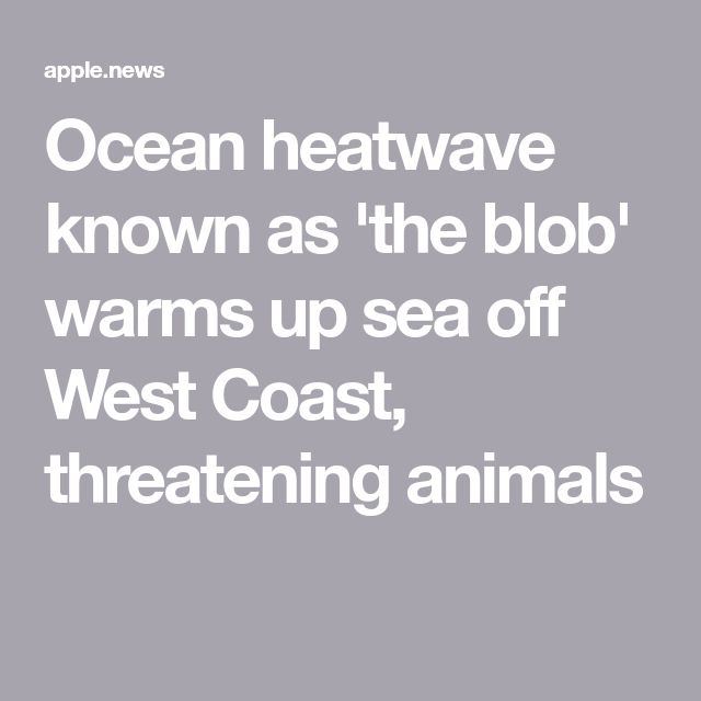 Ocean heatwave known as 'the blob' warms up sea off West Coast, threatening animals — USA TODAY