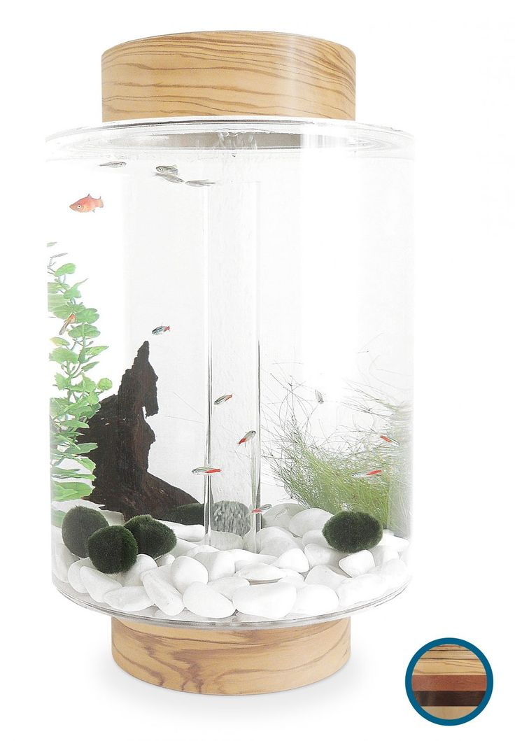 A beautiful 40 litre fish tank with interchangeable wooden lid and base, revolutionary lighting and a minimalist Swedish design rivalling Biorb fish tanks.