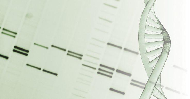 Técnicas para a separação de coloides e eletroforese. A eletroforese, também chamada de cataforese, é um processo eletrocinético descoberto em 1807 pelo cientista alemão Ferdinand Friedrich Reuss, depois de trabalhar com a influência da corrente contínua em soluções de água. A técnica, empregada para separar moléculas carregadas em uma matriz uniforme, tem sido utilizada por biólogos moleculares e ...