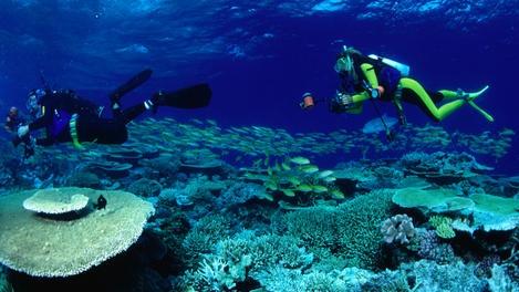 Diver photographers over reef - Great Barrier Reef, Queensland