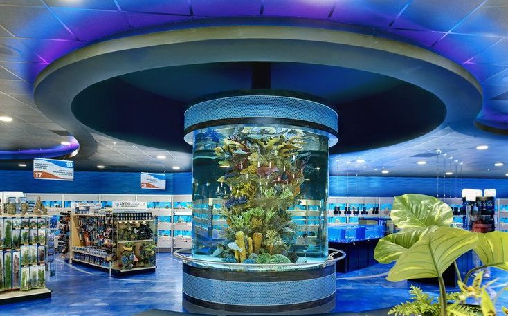 17 best images about fish aquarium s on pinterest for Circular fish tank