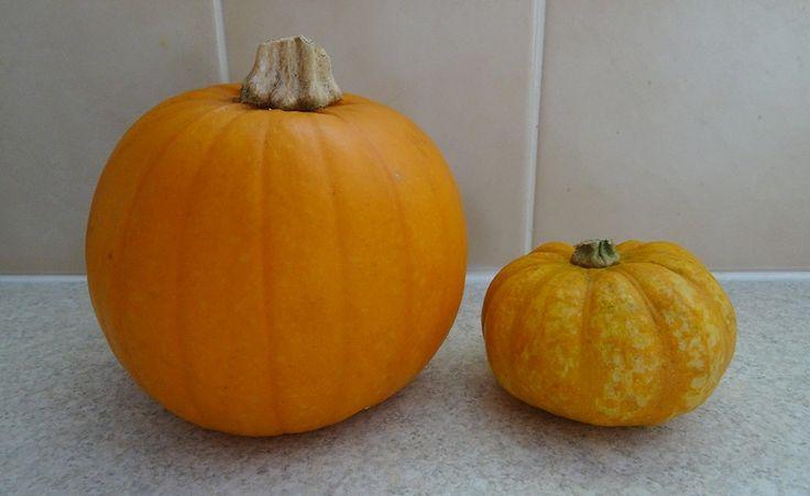 Blogtober day 31 | Halloween, pumpkins