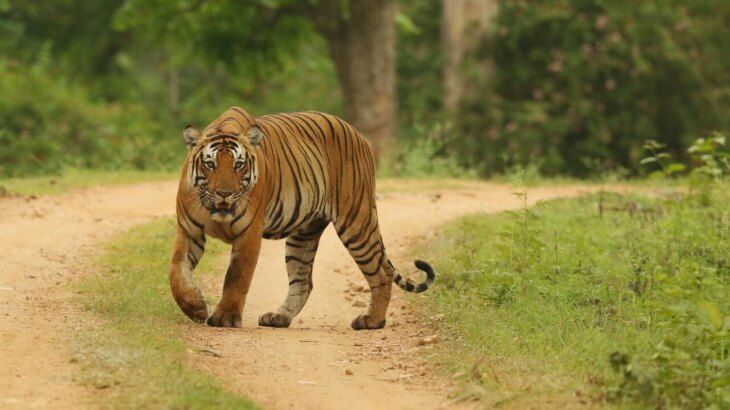 Here are a few national parks and wildlife sanctuaries which remain open even during monsoon..