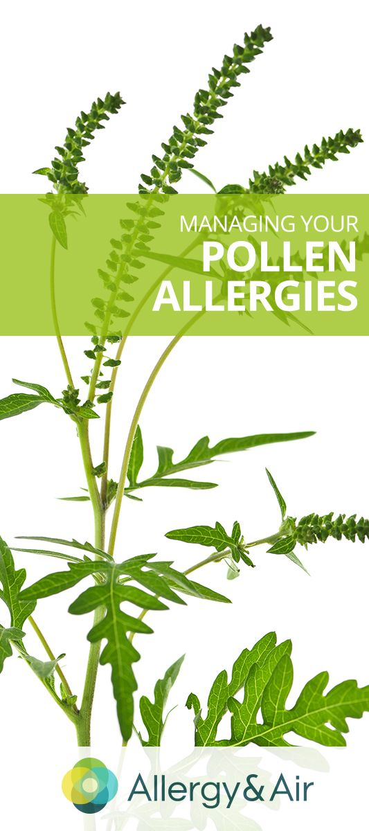 Ragweed Pollen Allergies