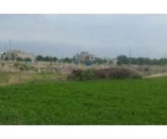 1000 kanal agricultural land is available for sale in good amount