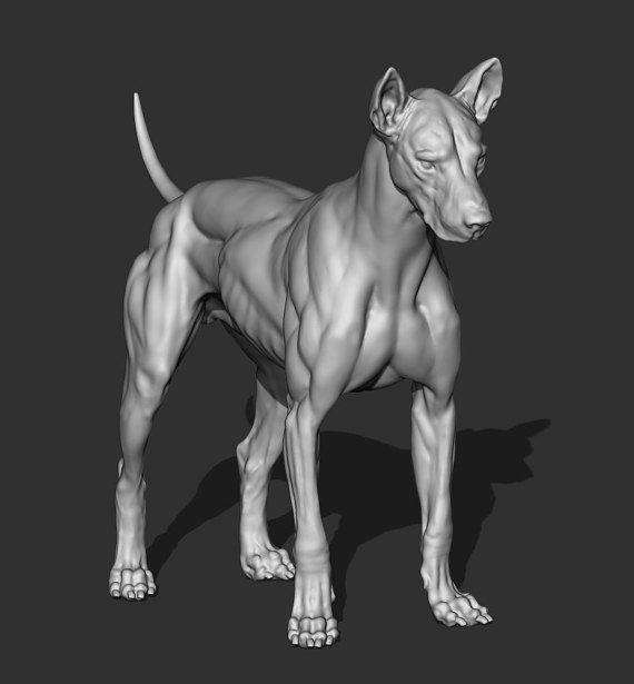 123 Best Learning Anatomy Images On Pinterest Animal Anatomy