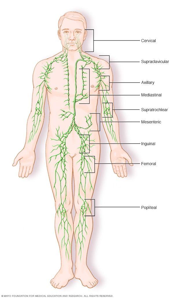 Non Hodgkin S Lymphoma Symptoms And Causes Mayo Clinic Lymphatic System Lymphoma Lymphatic System Lymph Nodes