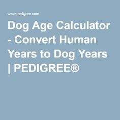 Dog Age Calculator - Convert Human Years to Dog Years | PEDIGREE®