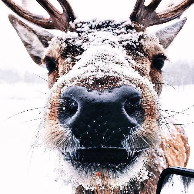 You're not Rudolph