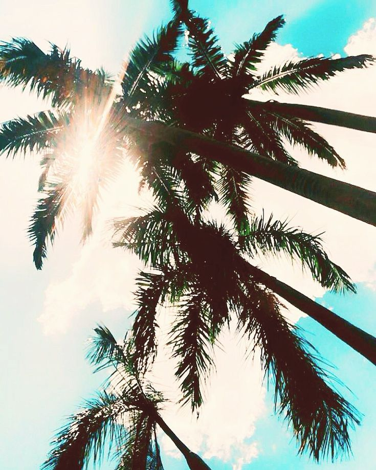Unter den Palmen 🌴. . . #palmtree #sunset #palmtrees #travel #summer    – Beach