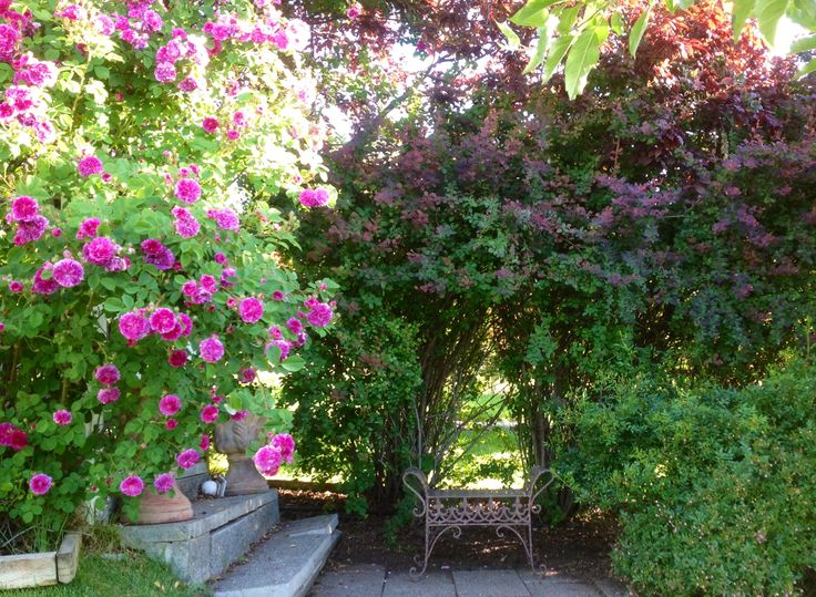Garden Bench Clark Gardens