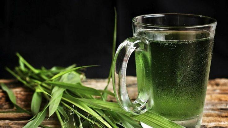 Por qué beber agua con clorofila