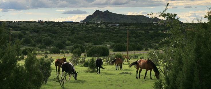 Lifesavers Wild Horse Rescue ~ Firelight South Ranch provides refuge for many horses in need.