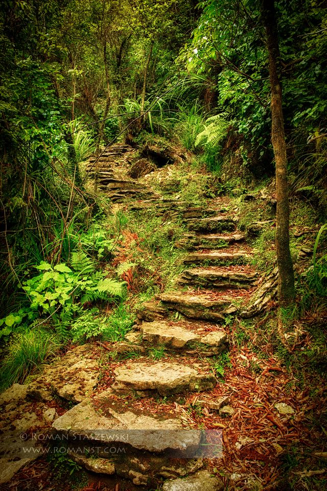 Secret Stairway to Paradise. South Island, New Zealand