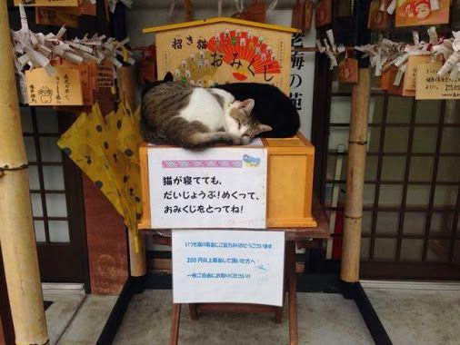 招き猫おみくじ (Maneki-neko Omikuji) # Beckoning paper fortune #Okay cat even though sleeping. It takes a paper fortune.