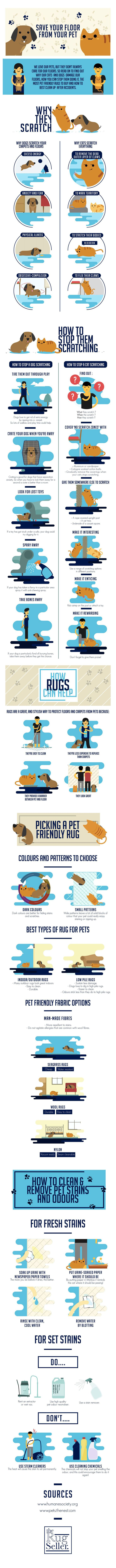Best 25 Pet Infographic Ideas On Pinterest Cleaning