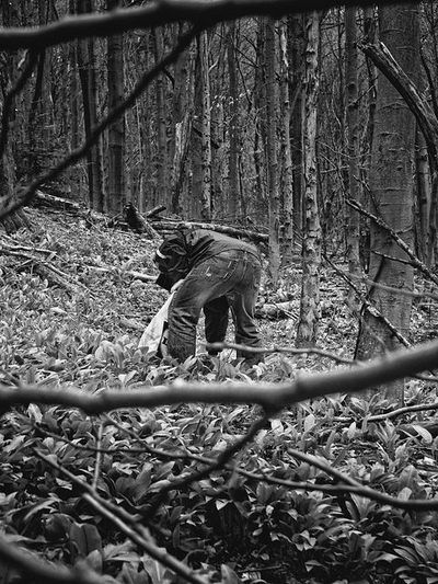 bwstock.photography - photo | free download black and white photos  //  #gatherer #bear-garlic