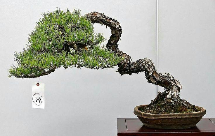 1188 best bonsai penjing and saikei images on pinterest for 7194 garden pond
