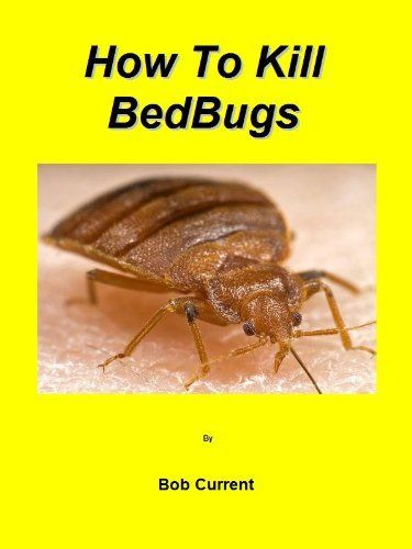 Image Result For Bed Bugs Solutiona