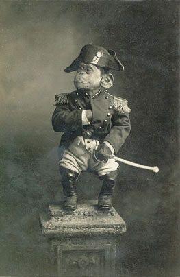 Napoleon chimp