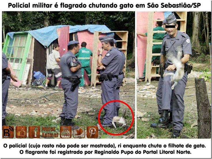 Mural Animal: Policial militar é flagrado chutando gato em São Sebastião/SP