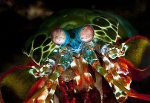 Najlepsze zdjęcie naukowe, czyli nominacje do nagrody Eureka 2012