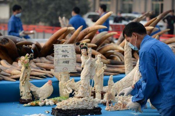 China decomisa piezas de marfil ilegal. Visite nuestra página y sea parte de nuestra conversación: http://www.namnewsnetwork.org/v3/spanish/index.php