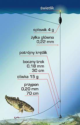 SSG - Miętus na spławik