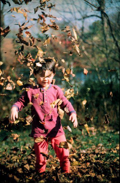 Leaves, fast shutter speed
