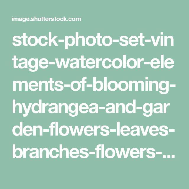 stock-photo-set-vintage-watercolor-elements-of-blooming-hydrangea-and-garden-flowers-leaves-branches-flowers-445631122.jpg (JPEG obrázek, 1500×1272 bodů) - Měřítko (52%)