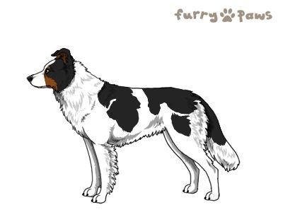 Furry Paws // UCH Kip's Hemp [1.618] 14.3 *BoB*'s Kennel